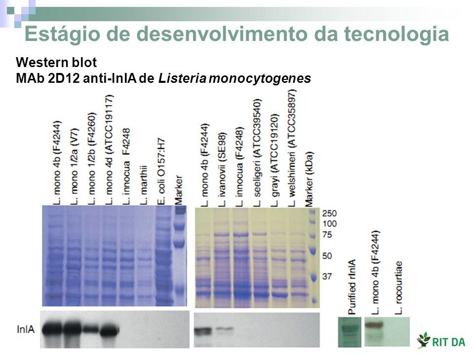 Estágio de desenvolvimento da tecnologia Western blot MAb 2D12 anti-InlA de Listeria monocytogenes