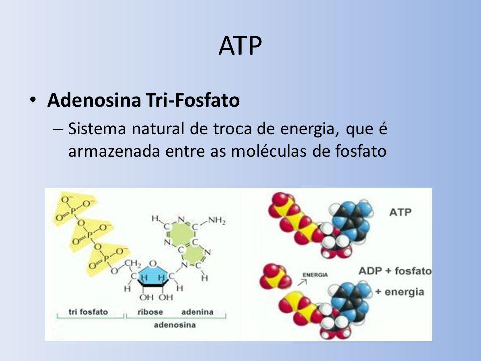 ATP Adenosina Tri-Fosfato – Sistema natural de troca de energia, que é armazenada entre as moléculas de fosfato