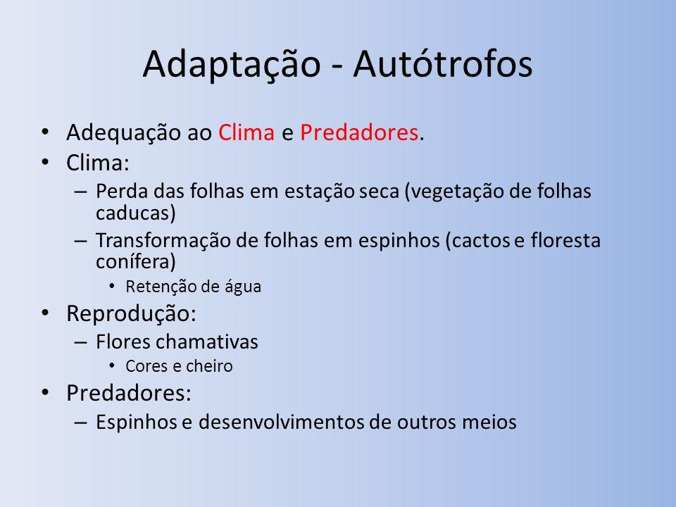 Adaptação - Autótrofos Adequação ao Clima e Predadores. Clima: – Perda das folhas em estação seca (vegetação de folhas caducas) – Transformação de fol