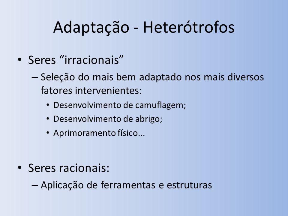 Adaptação - Heterótrofos Seres irracionais – Seleção do mais bem adaptado nos mais diversos fatores intervenientes: Desenvolvimento de camuflagem; Des