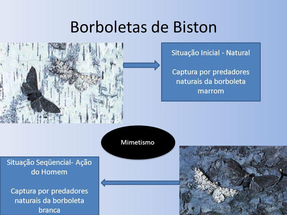 Borboletas de Biston Situação Inicial - Natural Captura por predadores naturais da borboleta marrom Situação Seqüencial- Ação do Homem Captura por pre