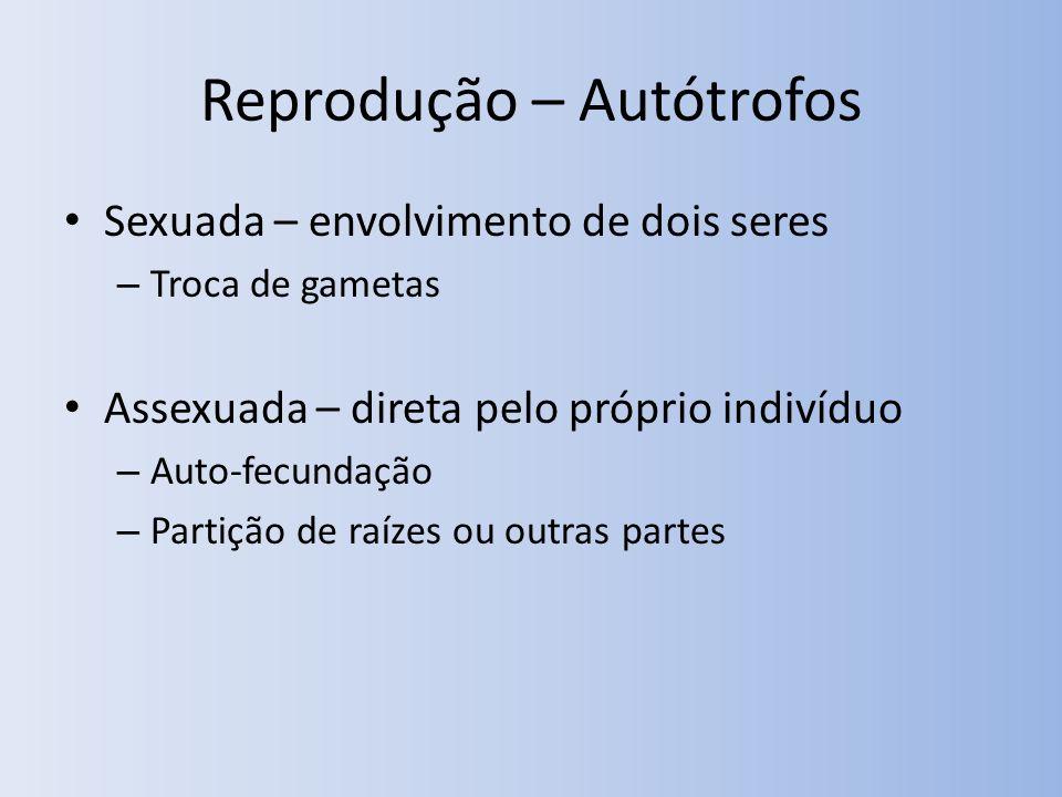 Reprodução – Autótrofos Sexuada – envolvimento de dois seres – Troca de gametas Assexuada – direta pelo próprio indivíduo – Auto-fecundação – Partição