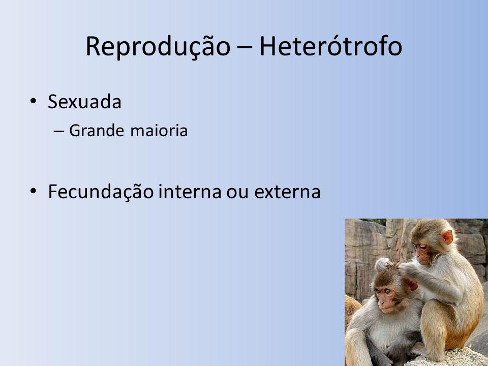 Reprodução – Heterótrofo Sexuada – Grande maioria Fecundação interna ou externa