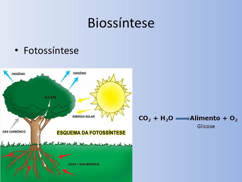 Biossíntese Fotossíntese CO 2 + H 2 O Alimento + O 2 Glicose