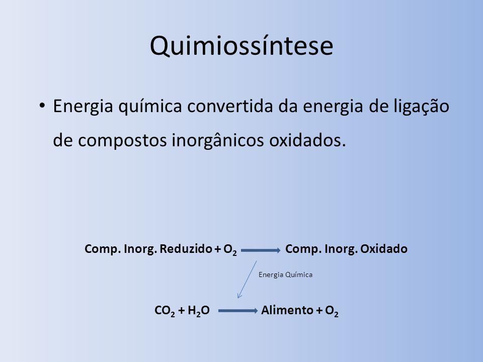 Quimiossíntese Energia química convertida da energia de ligação de compostos inorgânicos oxidados. Comp. Inorg. Reduzido + O 2 Comp. Inorg. Oxidado CO