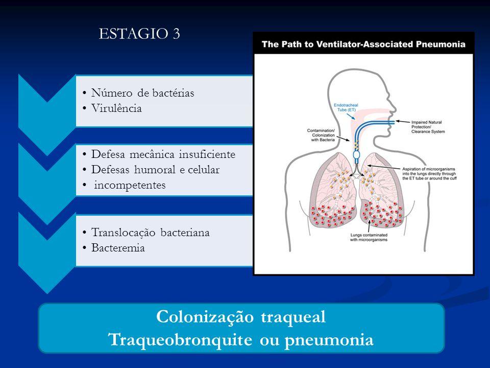ESTAGIO 3 Número de bactérias Virulência Defesa mecânica insuficiente Defesas humoral e celular incompetentes Translocação bacteriana Bacteremia Colon
