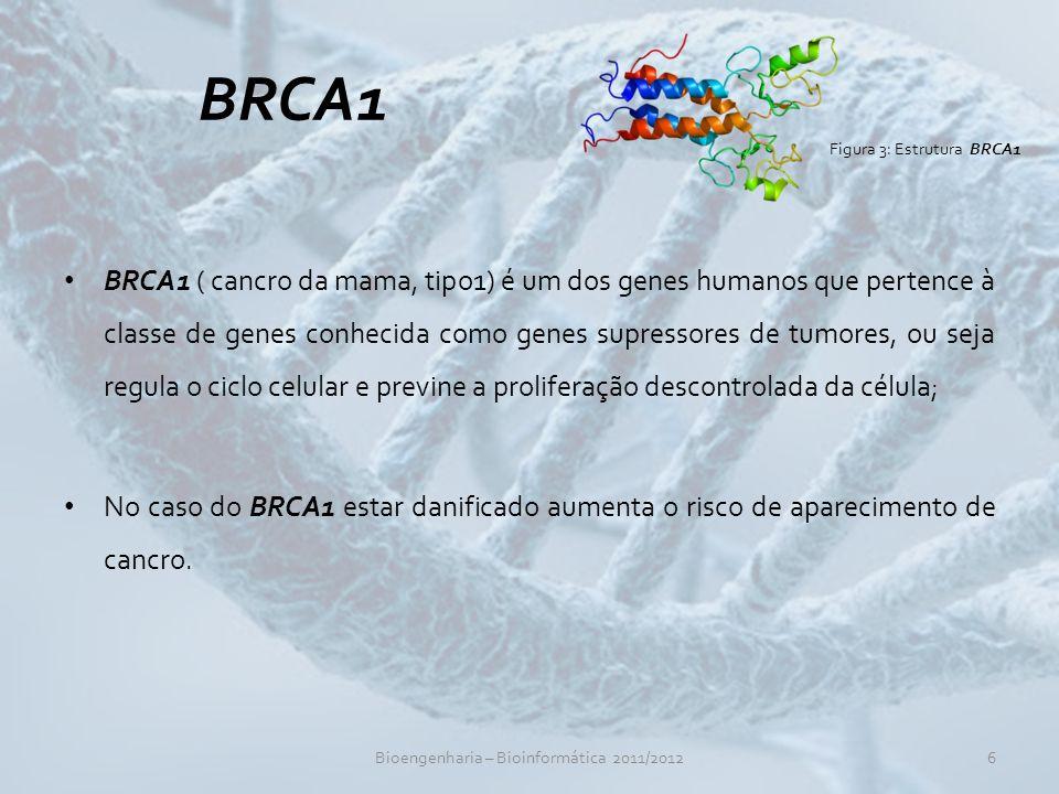 BRCA1 BRCA1 ( cancro da mama, tipo1) é um dos genes humanos que pertence à classe de genes conhecida como genes supressores de tumores, ou seja regula o ciclo celular e previne a proliferação descontrolada da célula; No caso do BRCA1 estar danificado aumenta o risco de aparecimento de cancro.