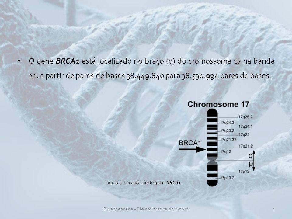 O gene BRCA1 está localizado no braço (q) do cromossoma 17 na banda 21, a partir de pares de bases 38.449.840 para 38.530.994 pares de bases.