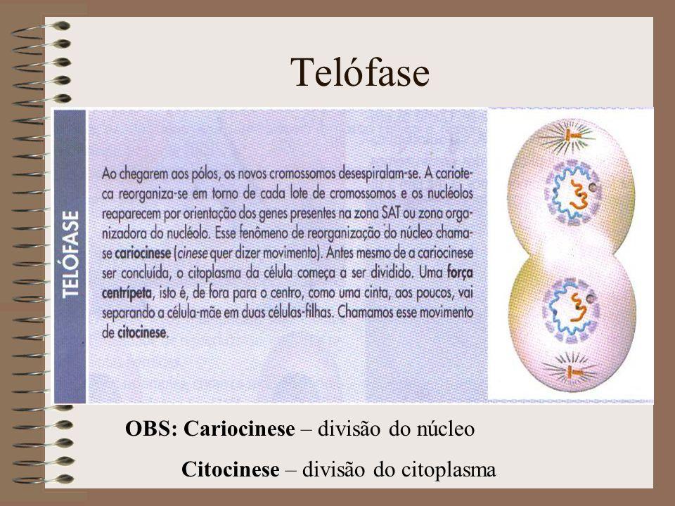 Telófase OBS: Cariocinese – divisão do núcleo Citocinese – divisão do citoplasma