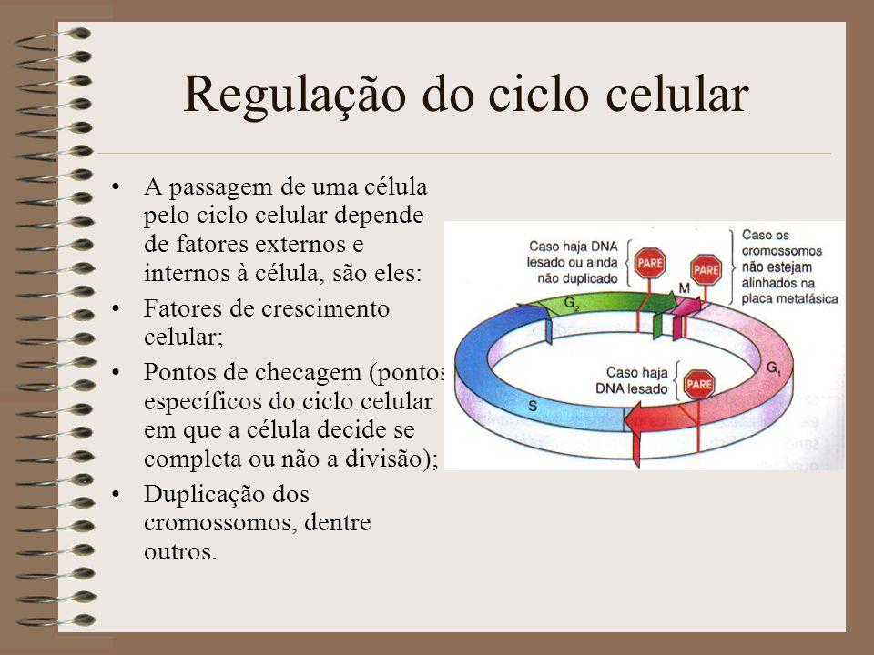 Regulação do ciclo celular A passagem de uma célula pelo ciclo celular depende de fatores externos e internos à célula, são eles: Fatores de crescimen