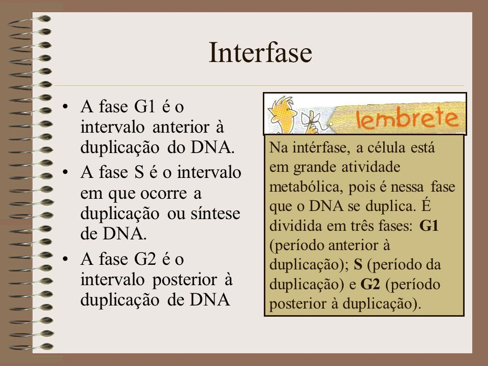 Interfase A fase G1 é o intervalo anterior à duplicação do DNA. A fase S é o intervalo em que ocorre a duplicação ou síntese de DNA. A fase G2 é o int