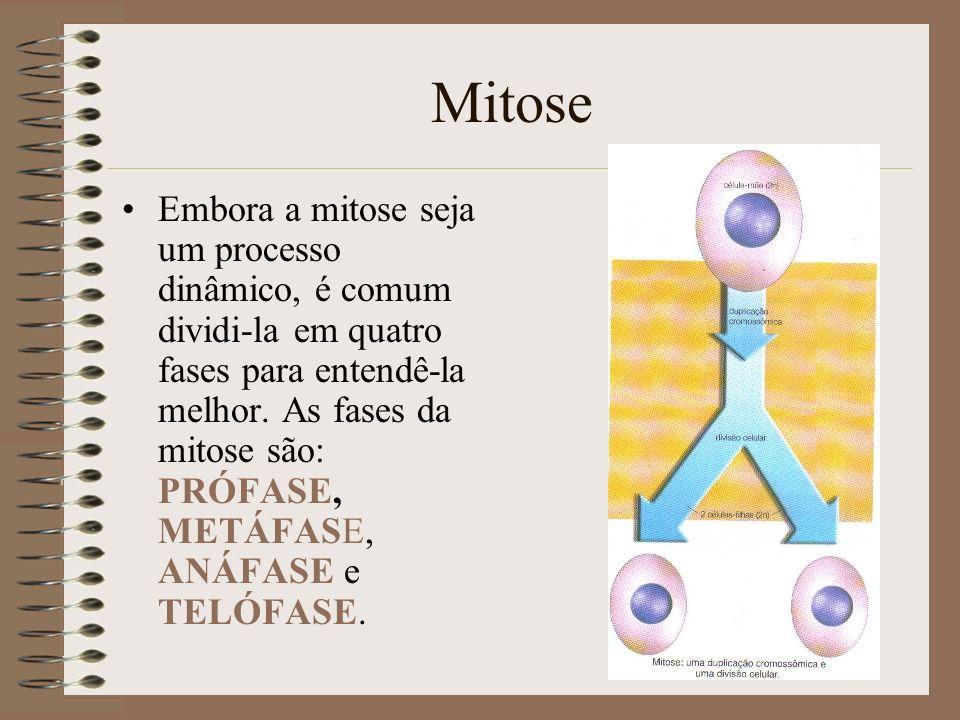 Mitose Embora a mitose seja um processo dinâmico, é comum dividi-la em quatro fases para entendê-la melhor. As fases da mitose são: PRÓFASE, METÁFASE,