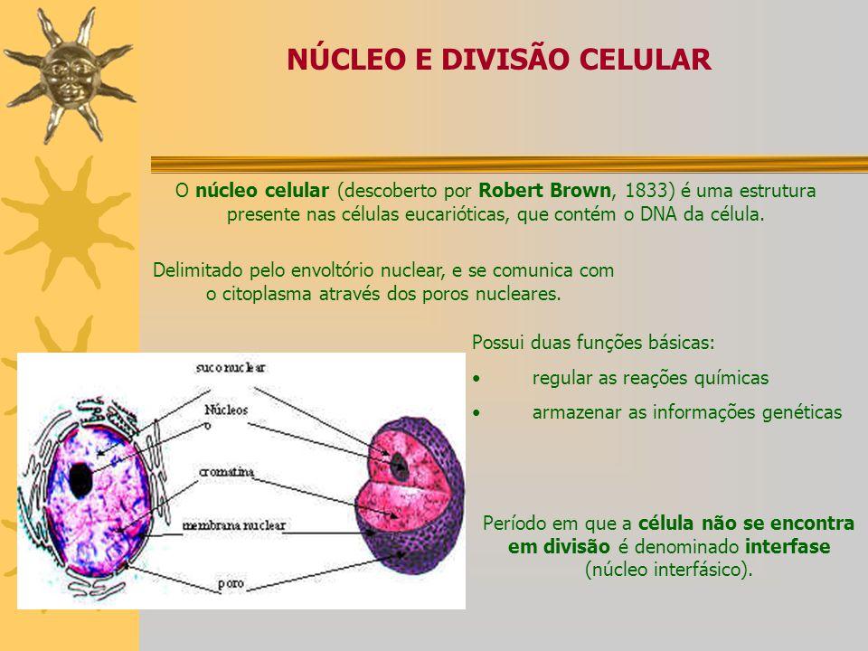 NÚCLEO E DIVISÃO CELULAR: Mitose e Meiose