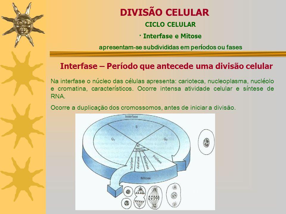 NÚCLEO E DIVISÃO CELULAR O núcleo celular (descoberto por Robert Brown, 1833) é uma estrutura presente nas células eucarióticas, que contém o DNA da c