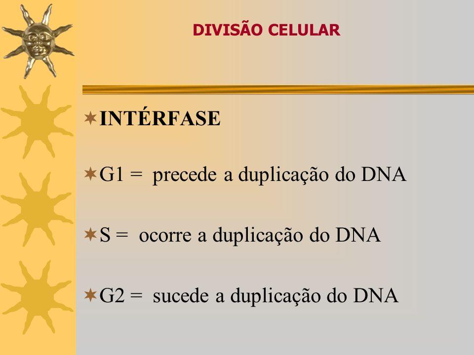 DIVISÃO CELULAR CICLO CELULAR · Interfase e Mitose apresentam-se subdivididas em per í odos ou fases Interfase – Período que antecede uma divisão celu