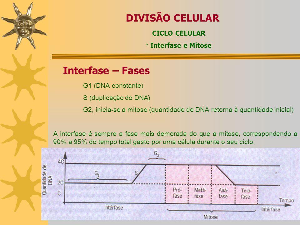 INTÉRFASE G1 = precede a duplicação do DNA S = ocorre a duplicação do DNA G2 = sucede a duplicação do DNA DIVISÃO CELULAR