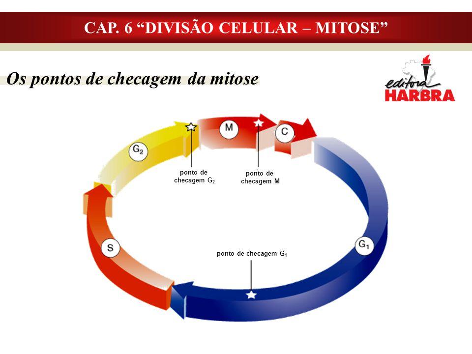 CAP. 6 DIVISÃO CELULAR – MITOSE Os pontos de checagem da mitose ponto de checagem G 2 ponto de checagem G 1 ponto de checagem M
