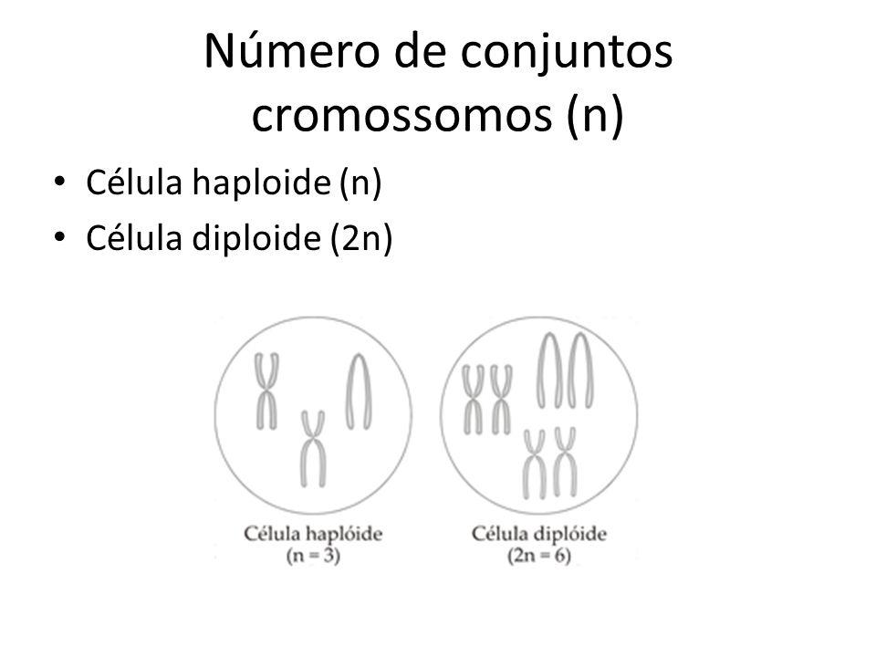 Número de conjuntos cromossomos (n) Célula haploide (n) Célula diploide (2n)