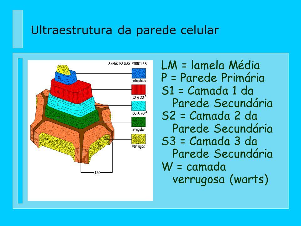 n Em madeiras oriundas de zonas temperadas, as porções dos constituintes alto poliméricos da parede celular, somam cerca de 97~99% do material madeira