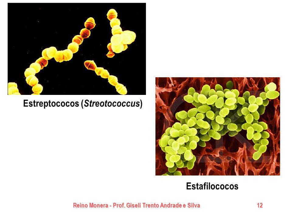 Reino Monera - Prof. Giseli Trento Andrade e Silva 12 Estafilococos Estreptococos ( Streotococcus )