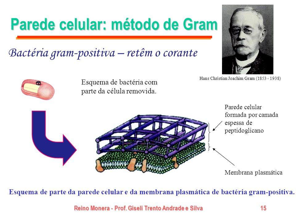 Reino Monera - Prof. Giseli Trento Andrade e Silva15 Parede celular: método de Gram Bactéria gram-positiva – retêm o corante Membrana plasmática Pared