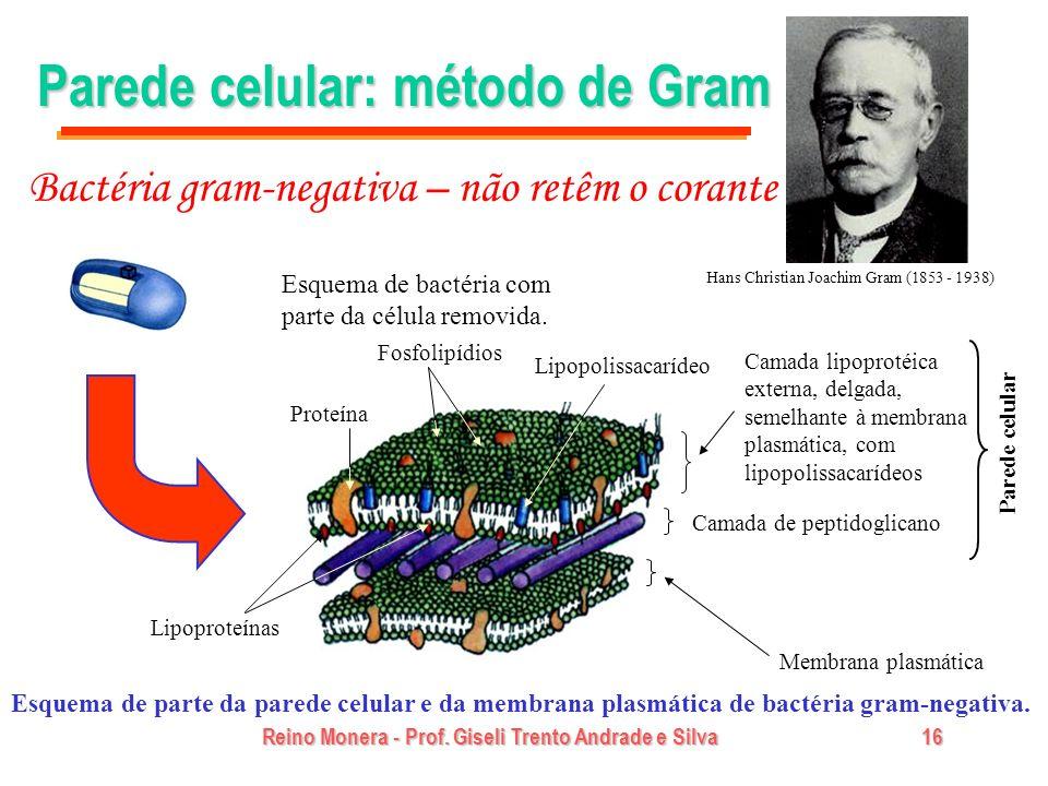 Reino Monera - Prof. Giseli Trento Andrade e Silva16 Parede celular: método de Gram Esquema de parte da parede celular e da membrana plasmática de bac