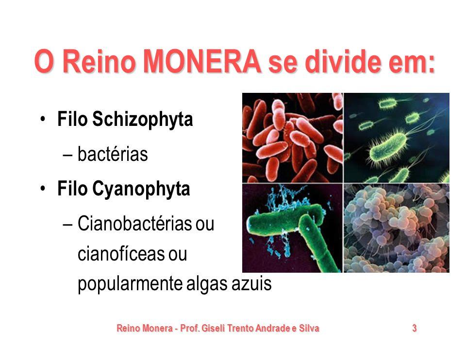 Reino Monera - Prof. Giseli Trento Andrade e Silva3 O Reino MONERA se divide em: Filo Schizophyta –bactérias Filo Cyanophyta –Cianobactérias ou cianof
