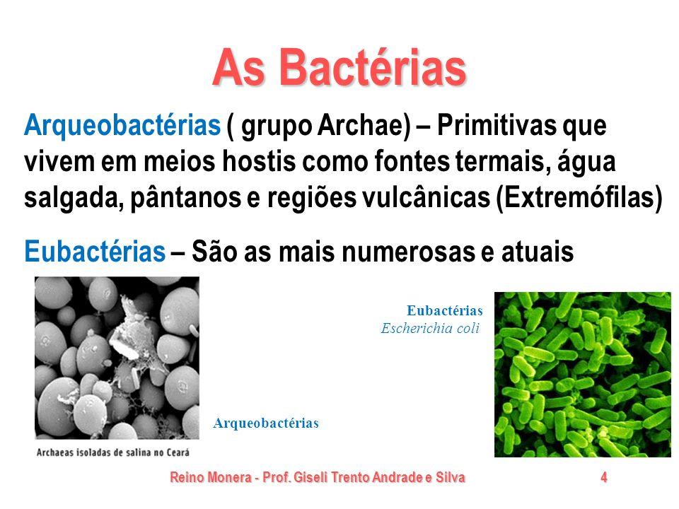Reino Monera - Prof. Giseli Trento Andrade e Silva 4 As Bactérias Arqueobactérias ( grupo Archae) – Primitivas que vivem em meios hostis como fontes t