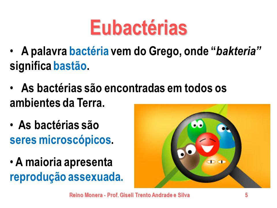 Reino Monera - Prof. Giseli Trento Andrade e Silva 5 Eubactérias A palavra bactéria vem do Grego, onde bakteria significa bastão. As bactérias são enc