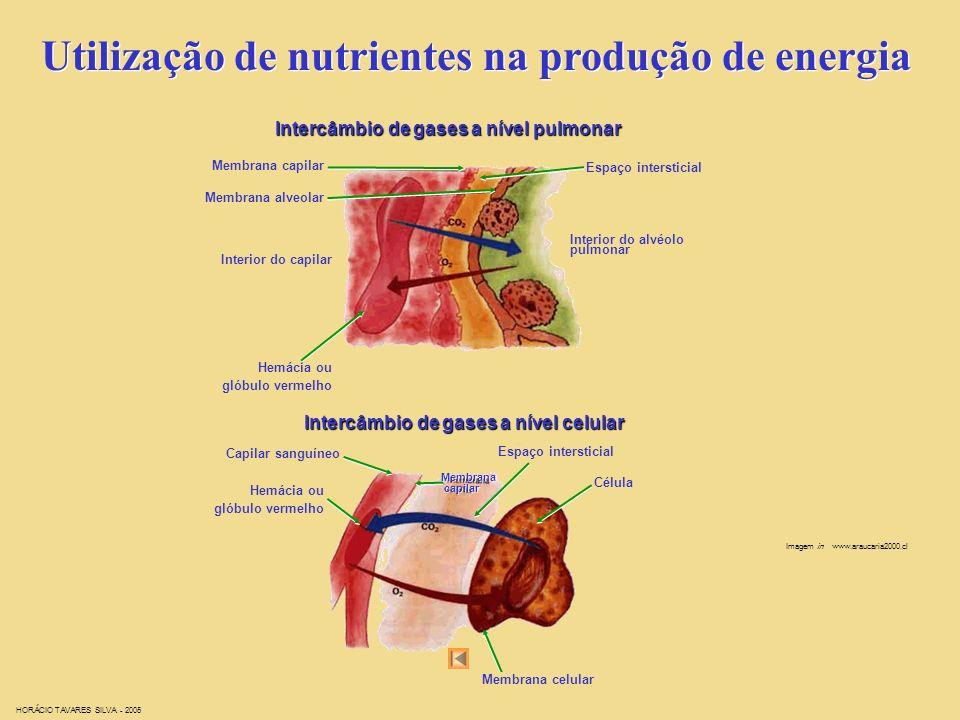 Utilização de nutrientes na produção de energia Imagem in www.innerbody.com HORÁCIO TAVARES SILVA - 2005
