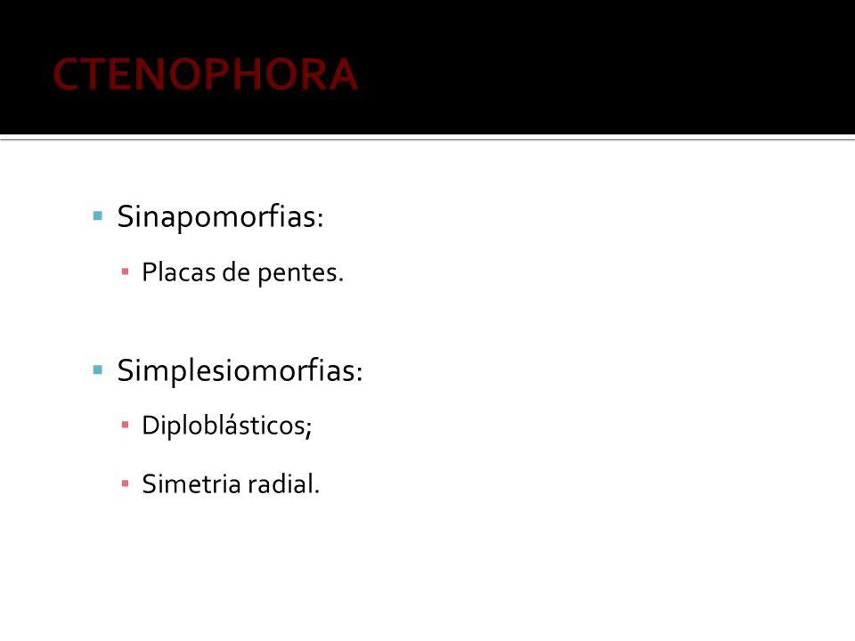 Sinapomorfias: Placas de pentes. Simplesiomorfias: Diploblásticos; Simetria radial.