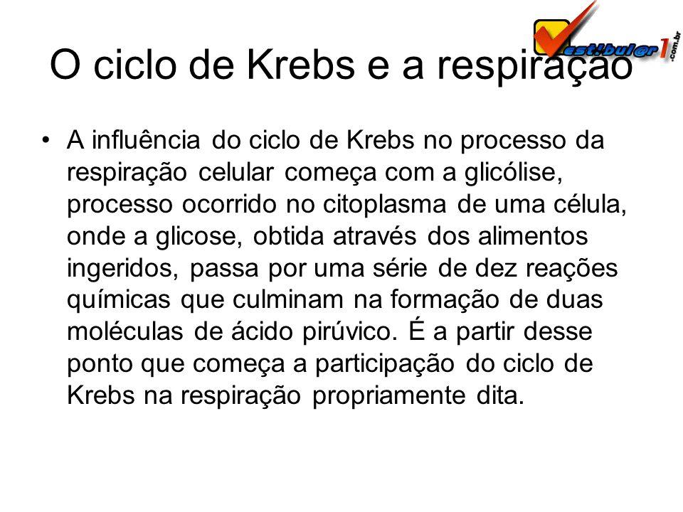 O ciclo de Krebs e a respiração A influência do ciclo de Krebs no processo da respiração celular começa com a glicólise, processo ocorrido no citoplas