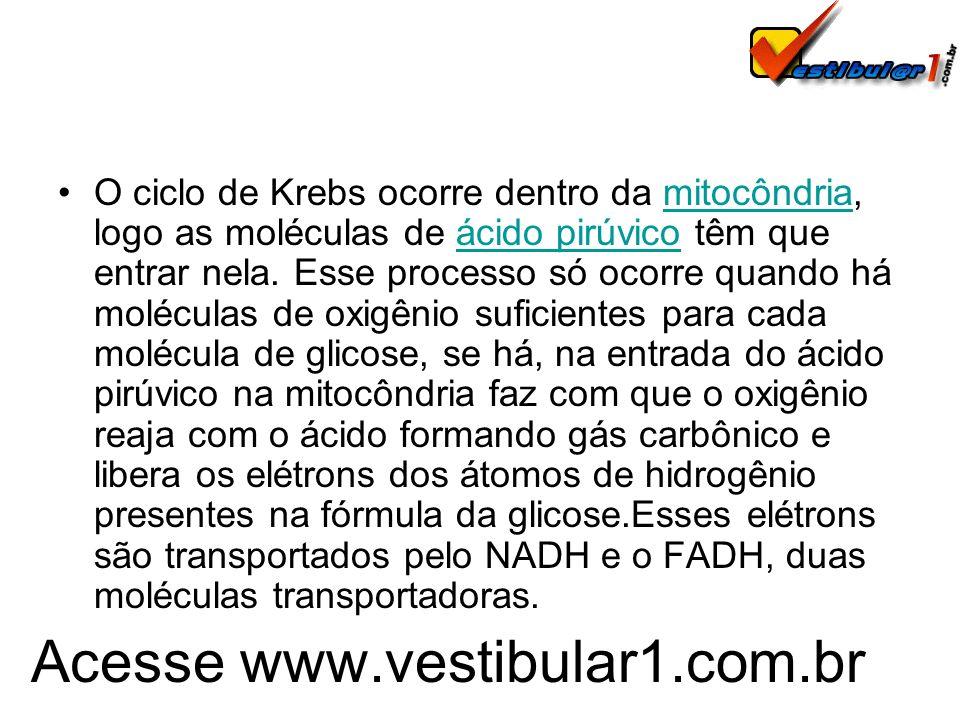 Acesse www.vestibular1.com.br O ciclo de Krebs ocorre dentro da mitocôndria, logo as moléculas de ácido pirúvico têm que entrar nela. Esse processo só
