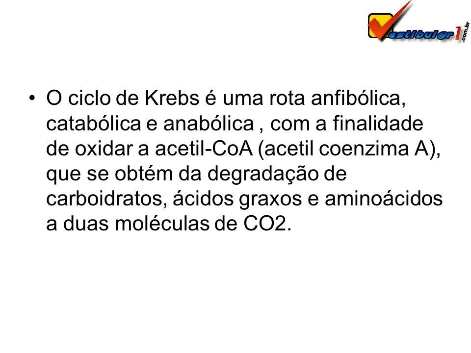 O ciclo de Krebs é uma rota anfibólica, catabólica e anabólica, com a finalidade de oxidar a acetil-CoA (acetil coenzima A), que se obtém da degradaçã