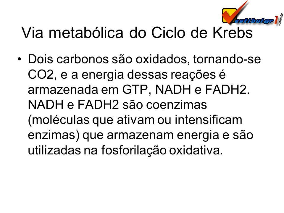 Via metabólica do Ciclo de Krebs Dois carbonos são oxidados, tornando-se CO2, e a energia dessas reações é armazenada em GTP, NADH e FADH2. NADH e FAD