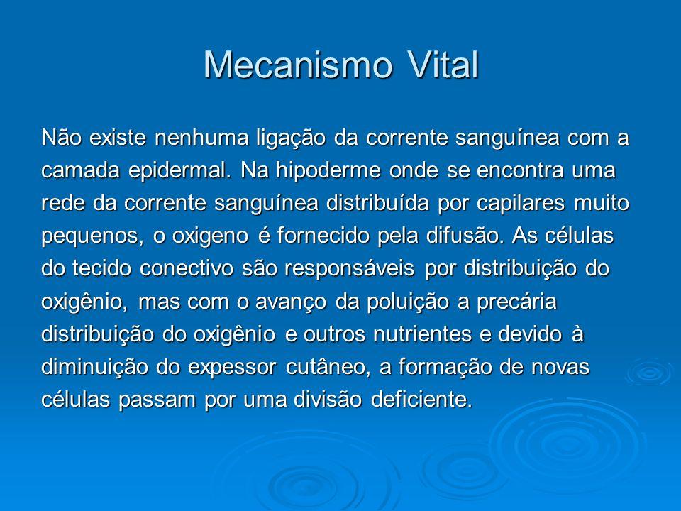 Mecanismo Vital Não existe nenhuma ligação da corrente sanguínea com a camada epidermal. Na hipoderme onde se encontra uma rede da corrente sanguínea