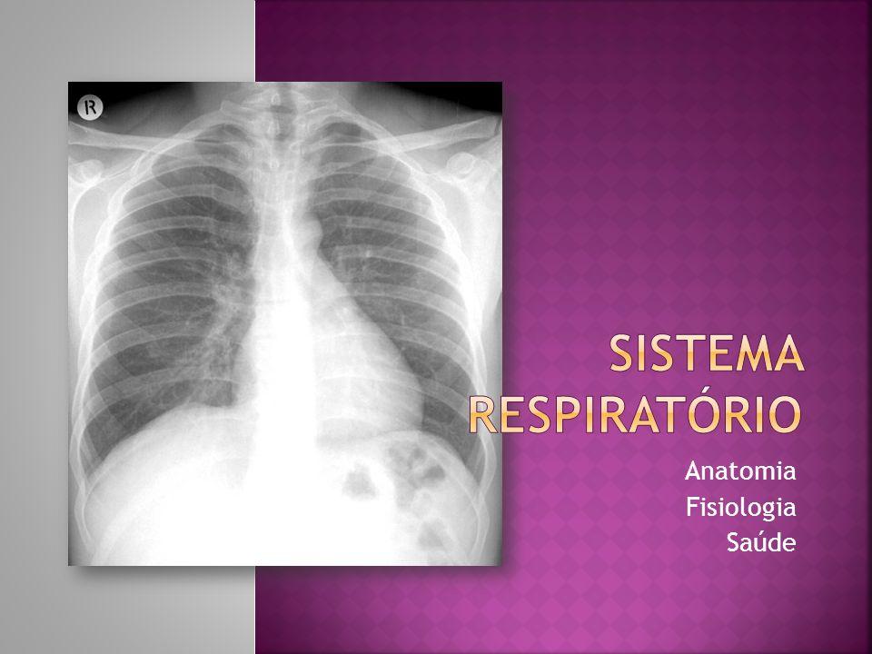 Cavidade nasalFaringeLaringeTraqueiaBrônquiosBronquíolosAlvéolos pulmonares Ciências Naturais 9º ano 2