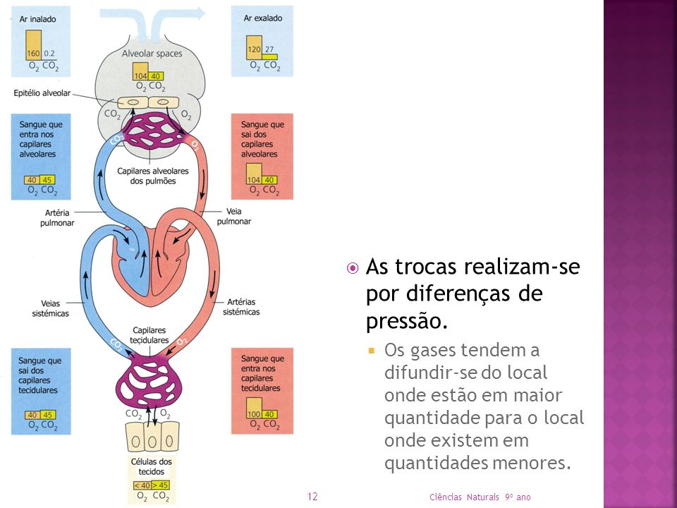 As trocas realizam-se por diferenças de pressão. Os gases tendem a difundir-se do local onde estão em maior quantidade para o local onde existem em qu