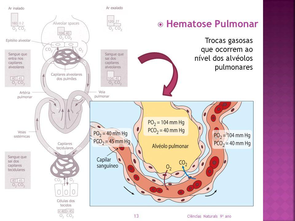 Hematose Pulmonar Ciências Naturais 9º ano 13 Trocas gasosas que ocorrem ao nível dos alvéolos pulmonares
