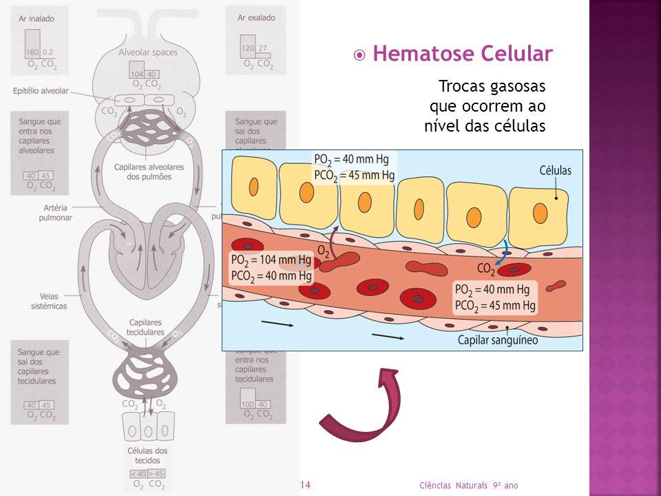 Hematose Celular Ciências Naturais 9º ano 14 Trocas gasosas que ocorrem ao nível das células