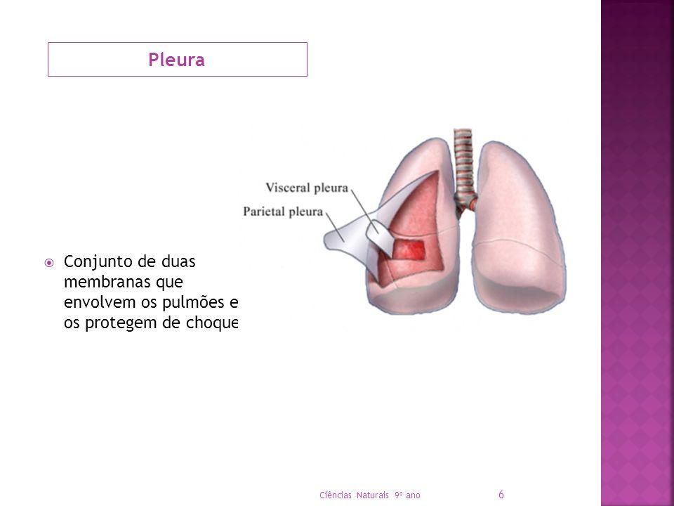 Pleura Conjunto de duas membranas que envolvem os pulmões e os protegem de choques Ciências Naturais 9º ano 6