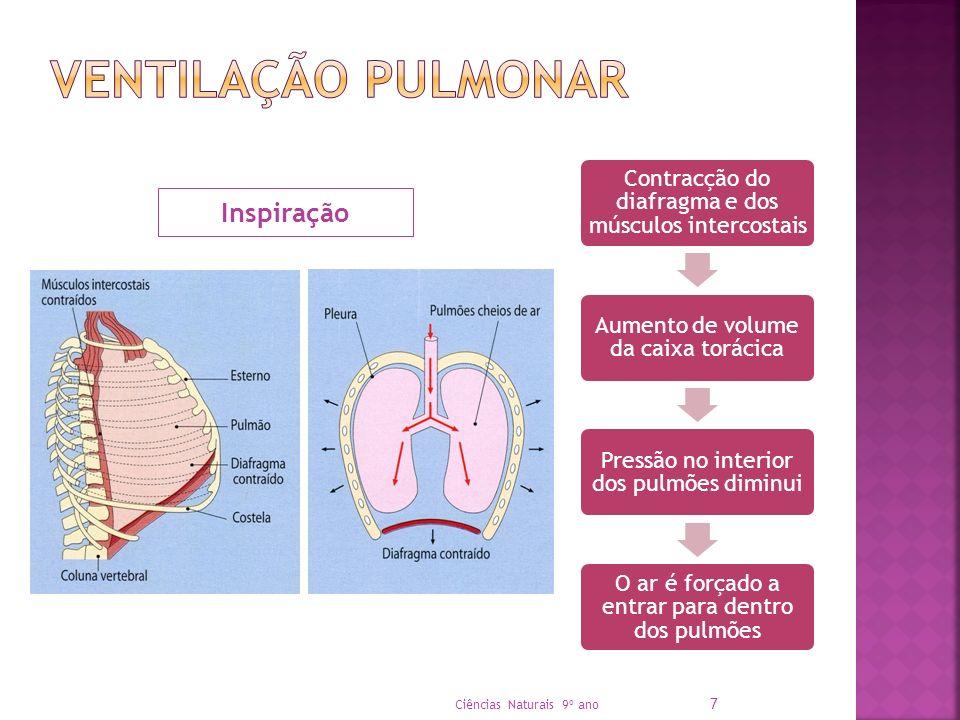 Contracção do diafragma e dos músculos intercostais Aumento de volume da caixa torácica Pressão no interior dos pulmões diminui O ar é forçado a entra