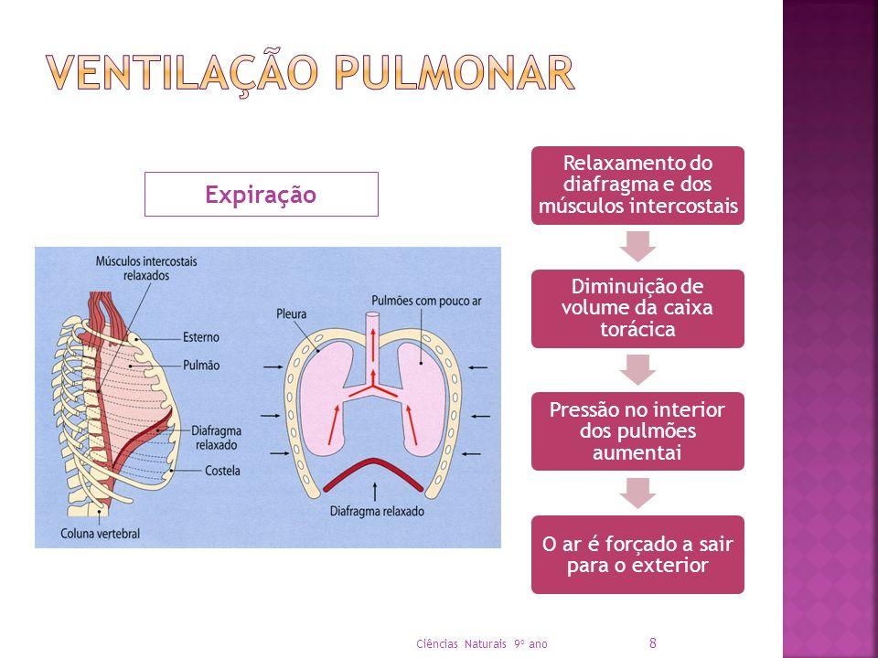 Relaxamento do diafragma e dos músculos intercostais Diminuição de volume da caixa torácica Pressão no interior dos pulmões aumentai O ar é forçado a