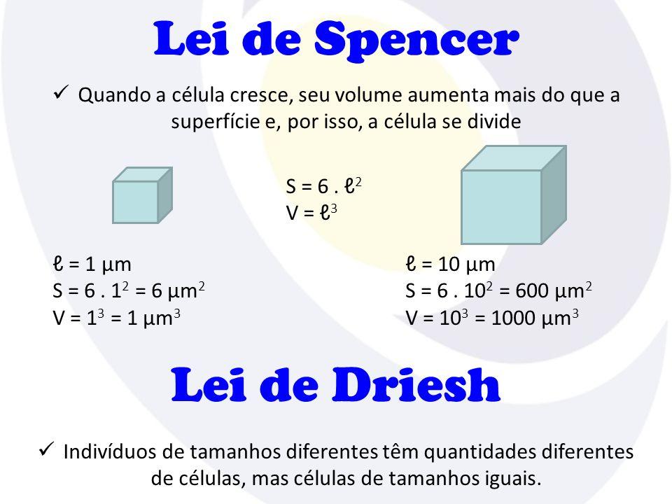 Lei de Spencer Quando a célula cresce, seu volume aumenta mais do que a superfície e, por isso, a célula se divide S = 6.