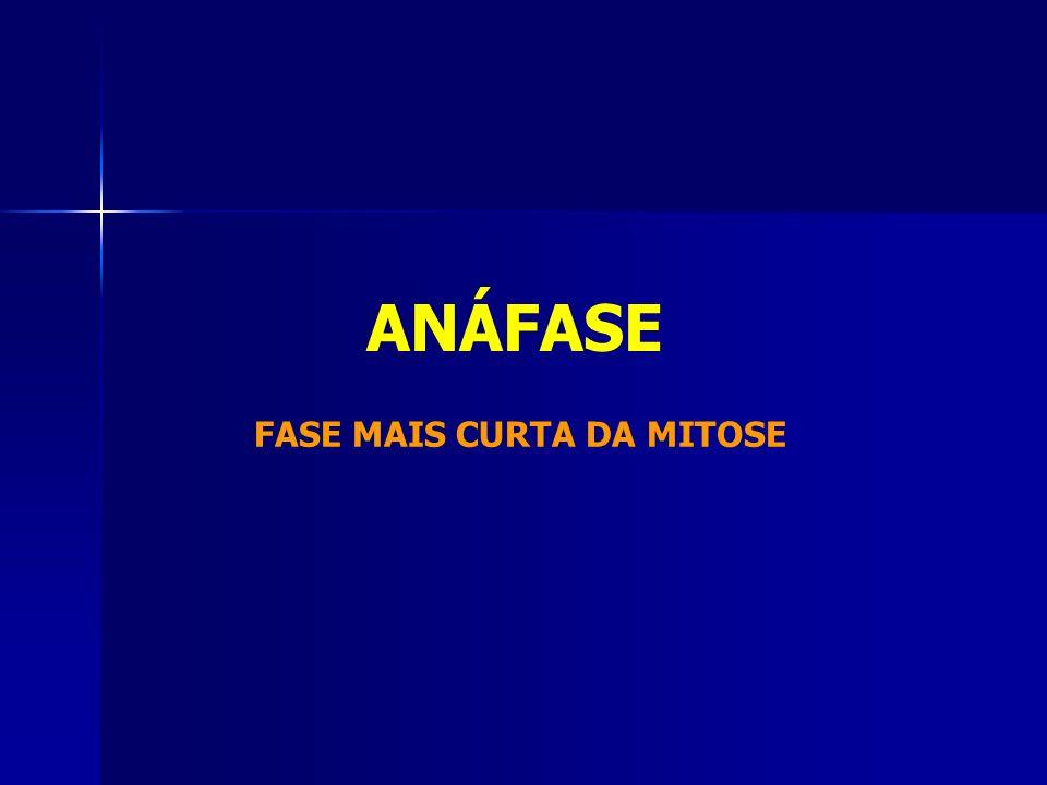ANÁFASE FASE MAIS CURTA DA MITOSE