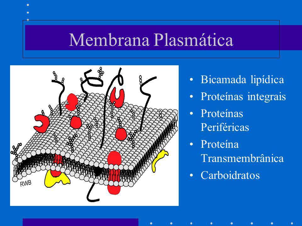 Membrana Plasmática Bicamada lipídica Proteínas integrais Proteínas Periféricas Proteína Transmembrânica Carboidratos