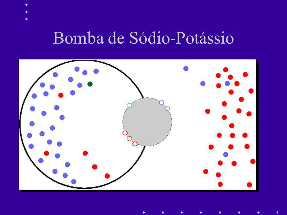 Bomba Sódio-Potássio ATPase Inward Sodium Flux Outward Potassium Flux 3 Na + 2 K + ATP Mg ++ ADP + P i