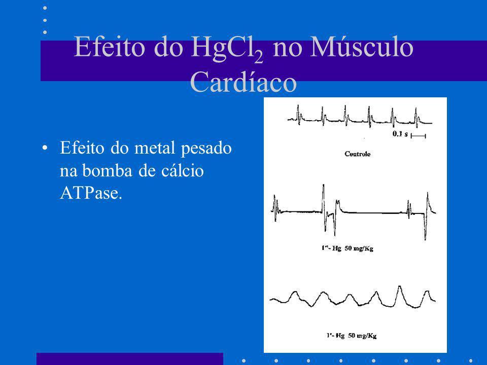 Efeito do HgCl 2 no Músculo Cardíaco Efeito do metal pesado na bomba de cálcio ATPase.
