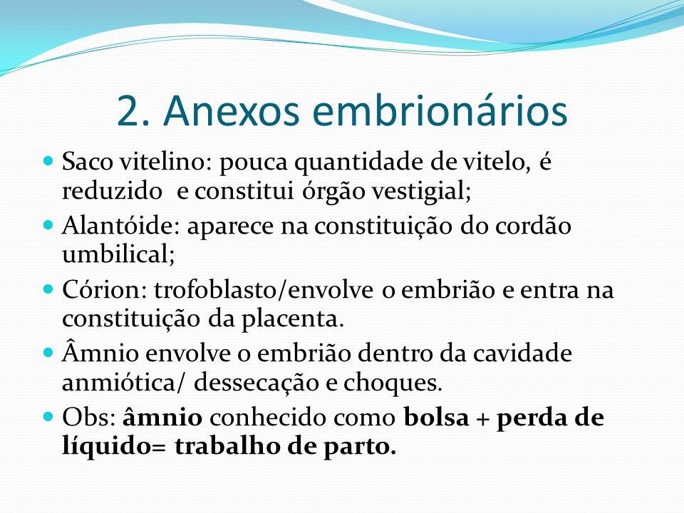 2. Anexos embrionários Saco vitelino: pouca quantidade de vitelo, é reduzido e constitui órgão vestigial; Alantóide: aparece na constituição do cordão