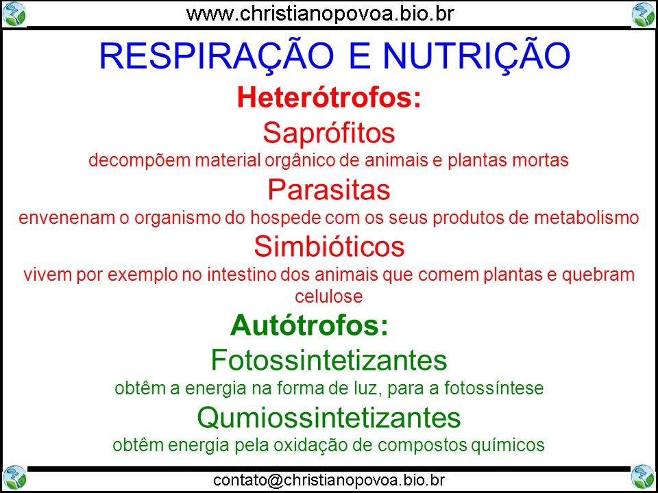 Heterótrofos: Saprófitos decompõem material orgânico de animais e plantas mortas Parasitas envenenam o organismo do hospede com os seus produtos de me
